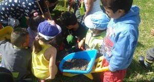 cajica siembra arboles programa frutos urbanos ecologia