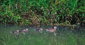 Humedales aves internacionales